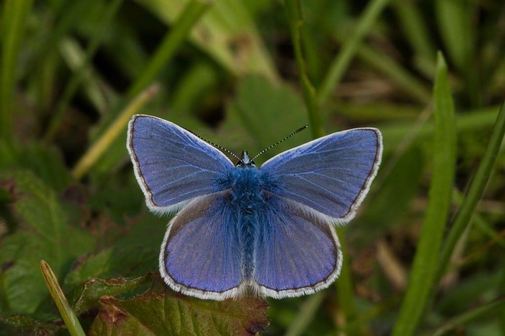 Schrijfuitdaging: dag 2 De vlinder