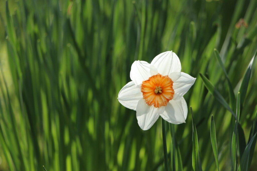 narcist, genoemd naar de bloem Narcis