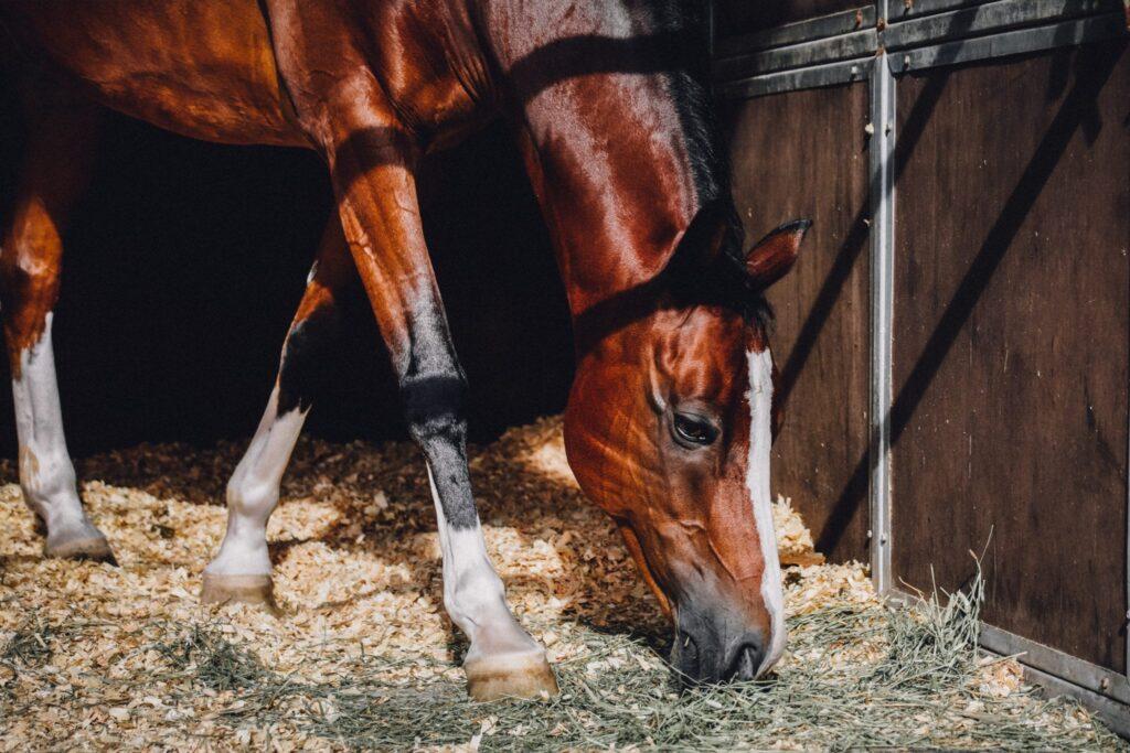 Spreekwoord 1: paardje ruikt zijn stal