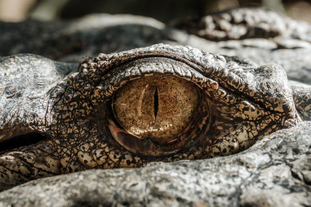 gevaarlijk dier, blijf weg, pas op, kijk uit
