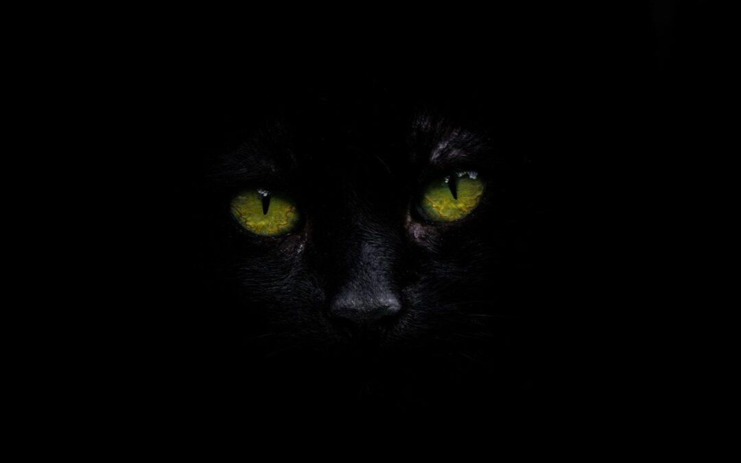 Spreekwoord 8 – de kat de bel aanbinden