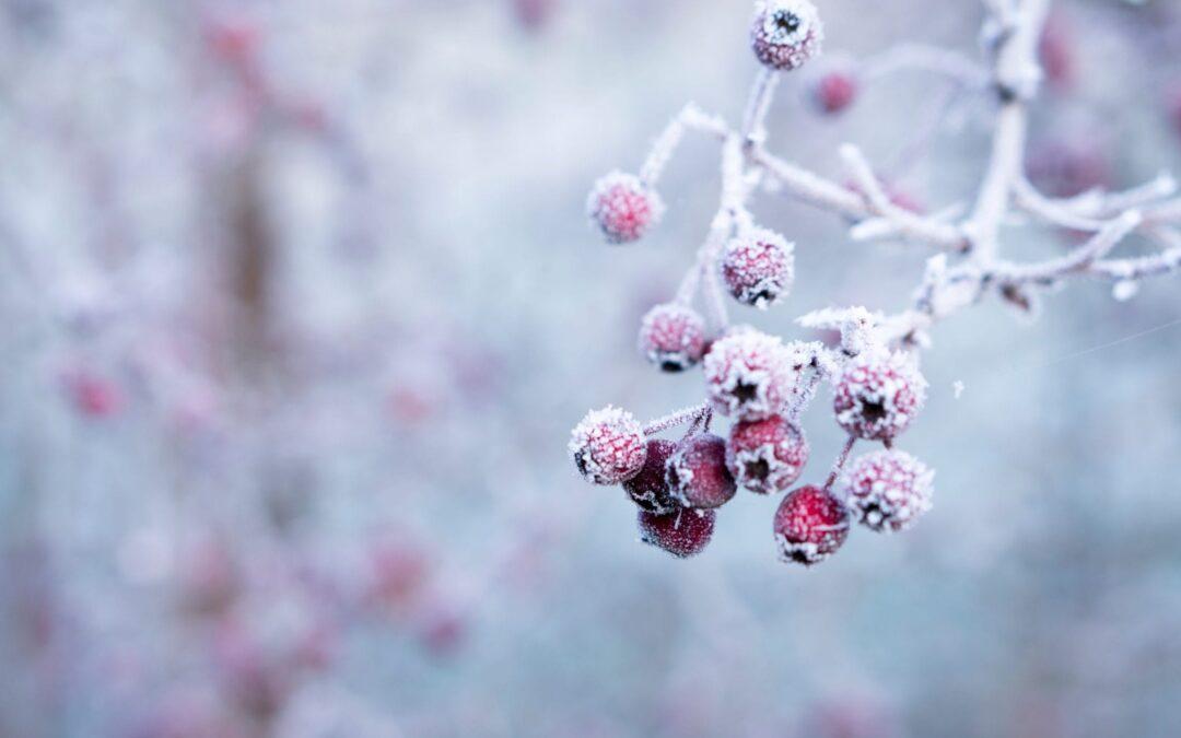 Spreekwoord 9: februari guur en koud…