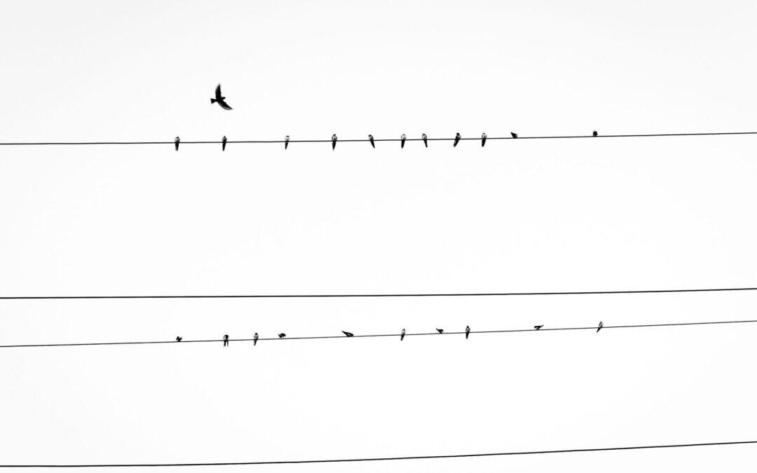 Vogels op een elektriciteitslijn met een blanco achtergrond