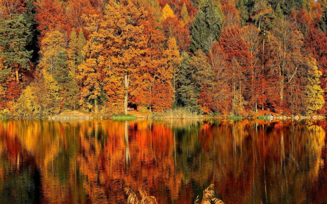 Herfst ~ #WOT deel 33
