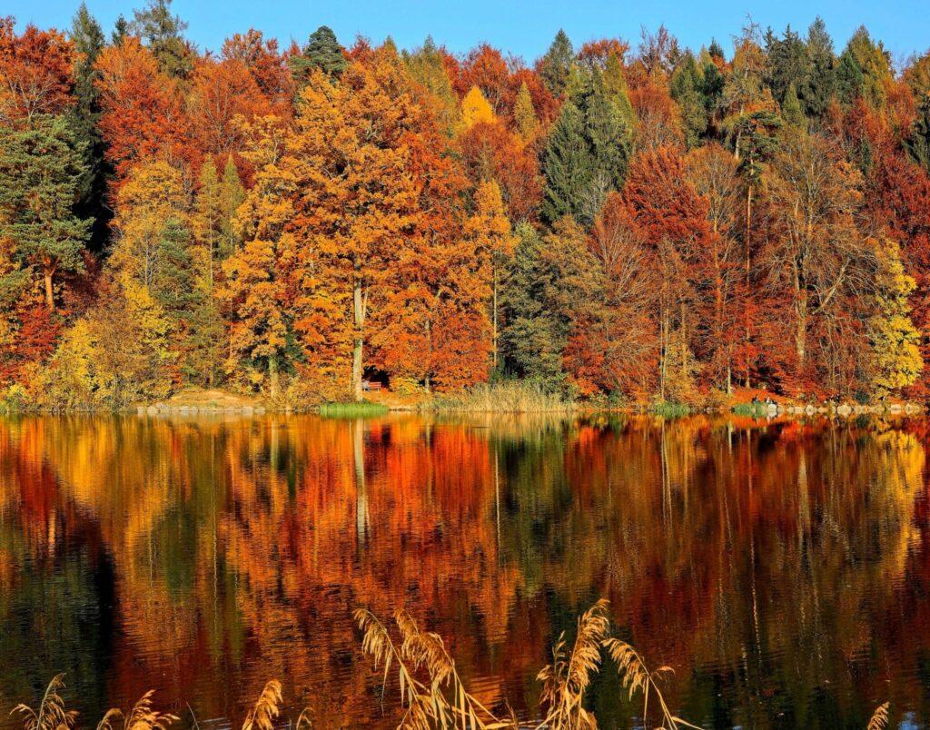 Herfst: de herfstkleuren in de bomen